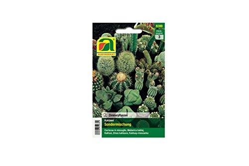 Mezcla especial de cactus