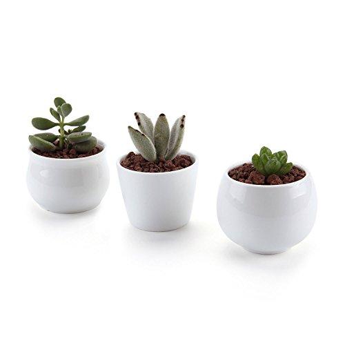 Conjunto de 3 colección cerámica blanca no.31 cerámicos planta maceta suculento cactus planta maceta planta contenedor vivero maceta macetas de jardín macetas envase