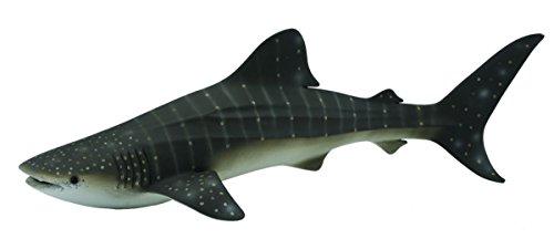 Tiburon ballena -xl