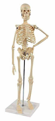 S24.1212 mini esqueleto humano